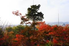 今年最後の見頃であろう紅葉in高台寺9