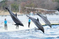 京都水族館のイルカのショー