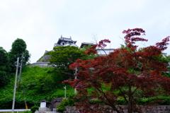 福知山城 季節外れの紅葉