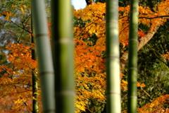 今年最後の見頃であろう紅葉in高台寺10