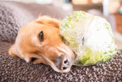 野菜ドロボウ