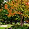 地元の秋が始まりました。