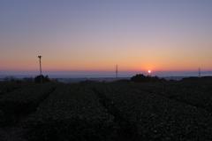 茶畑と夕日