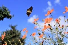 花と蝶 6