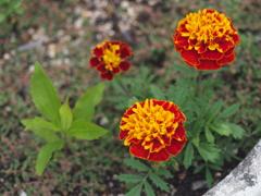 ベンチ横の花