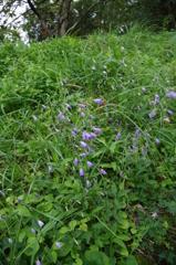 山で見つけた花
