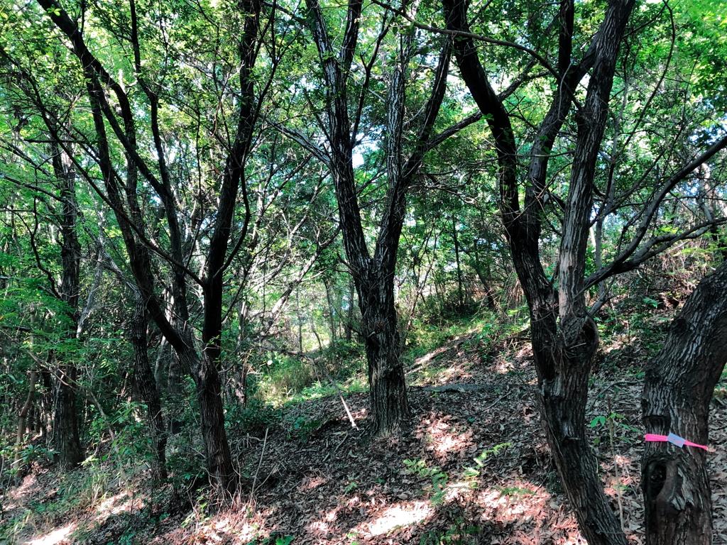 クワガタ林