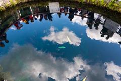 池の中から見える世界