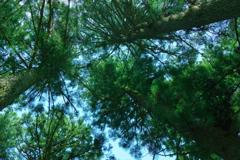 樹下に休らう