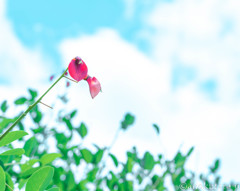 控えめな、なんかの花
