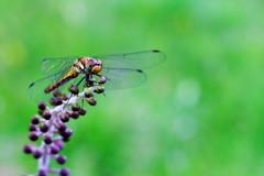 蜻蛉の季節