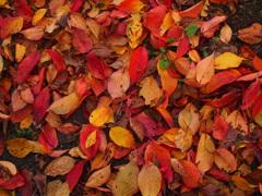 落ち葉のパレット 2