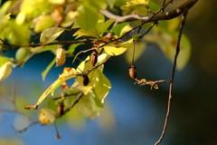 小さな木の実