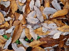落ち葉のパレット 1