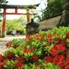 春、華やぐ宇治の参道