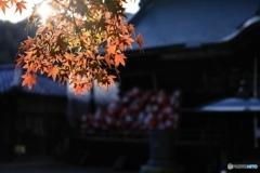 縁起達磨の少林山3