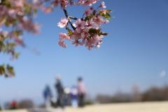 桜と丘と家族