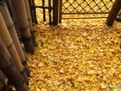 黄金色の庭先
