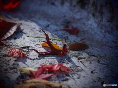 過ぎゆく秋