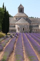 セナンク修道院の夏