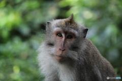 自分の盛れる角度を知ってる猿