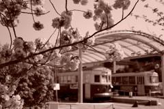 梅小路公園のチンチン電車