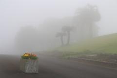 霧に包まれて〜♪