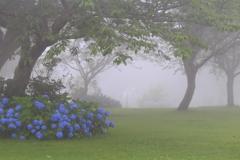 優しさに包まれて〜朝霧!