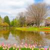 チューリップが咲く公園