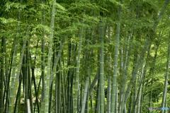 そよ風を運ぶ竹林