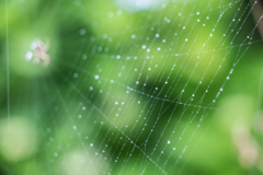 雨粒の装飾