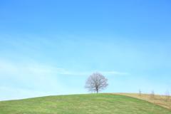 まあるい丘のまぁるいき木