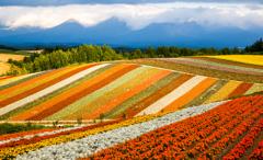オレンジの丘