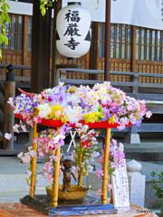 福厳寺の花堂
