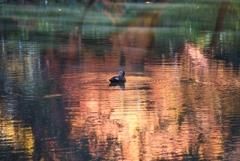 [52]「水面の秋」DSC_2876 N548