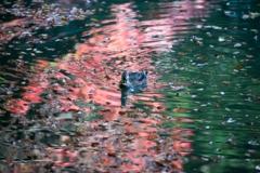 [55]「水面の紅葉」3459