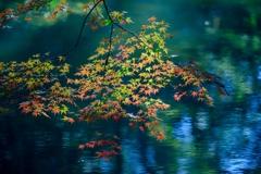 「水面に紅葉」-2