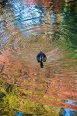 [53]「水面の秋」DSC_2883 N548