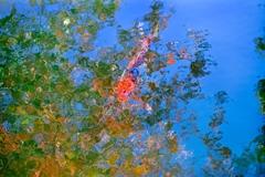 [56]「水面の鯉」