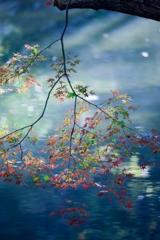 「水面に紅葉」-3