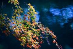 「水面に紅葉」-4