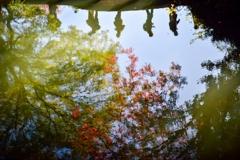 [57]「水面の紅葉」