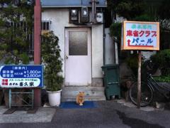 新世界の猫