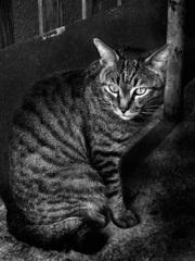 Osaka cat_12
