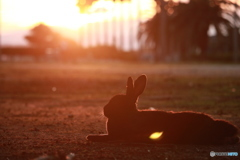 黄昏時のウサギ島