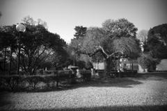 フレンツェホステルの庭