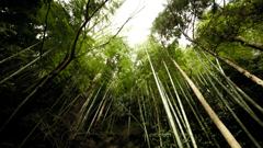 それは、竹。
