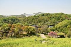 コスモスの丘with北神急行