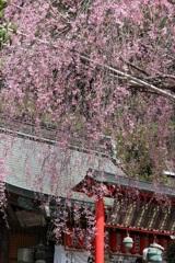 大平山の桜