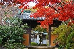 鎌倉 海蔵寺②